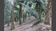 The Palm Oil Palm Off
