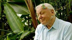 Attenborough's Fabulous Frogs