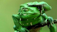 Frog applies 'sun cream'