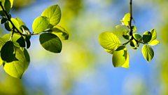 Rachmaninov: Spring Cantata