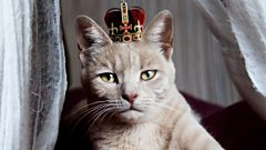 cat wearing a crown