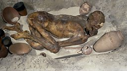 Image for Cold case Mummy