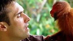 Image for Uakari: Secrets of the English Monkey