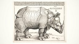 Image for Durer's Rhinoceros