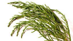 Image for Samphire