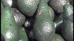 Image for US economy and Mexican avocados