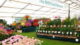 Image for RHS Tatton Flower Show