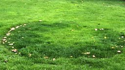 Image for Fairy Rings
