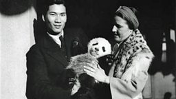 Image for The First Panda in America
