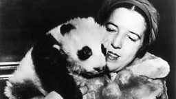 Image for The First Panda in the West