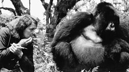 Image for The Killing of Dian Fossey