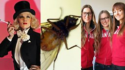 Image for Hollywood, Bugs and Sochi Ski Sisters