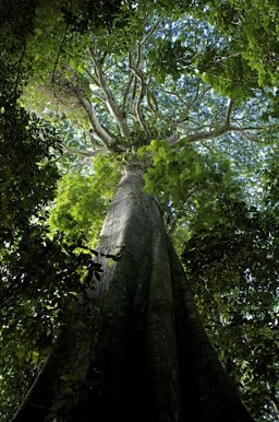 The Orinoco Canopy