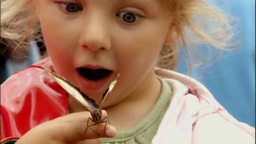 Child amazed at a butterfly's beauty