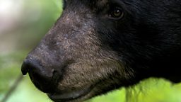 Photo: Black bear