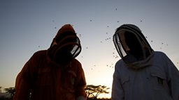 Filming crew in bee suits
