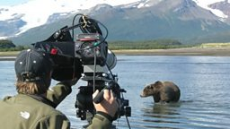 Filming bears in slow motion