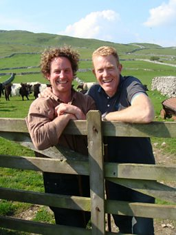 Limestone Belties 