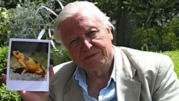 Sir David Attenborough at London Zoo