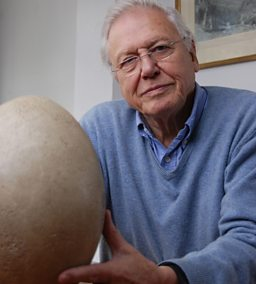 David Attenborough and his giant egg