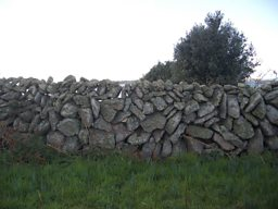 A dry stone wall sheltering a flower field at Churchtown Farm, St Martin's, Isles of Scilly