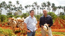 Photo: Sustainable farming in Cuba