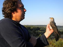 "Chris Hewson of the BTO with ""Chris"" the newly tagged Cuckoo before release on June 1, 2011"