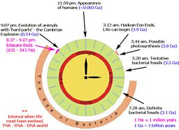 Earth clock illustrating the life of the Earth in relation to Ediacara Biota
