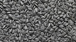 Sunflower Seeds up close