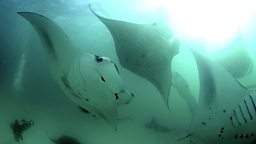 Photo: Manta group