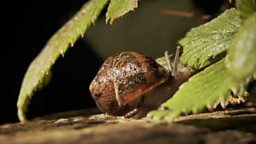 SLUG AND SNAIL RESISTANT PLANTS