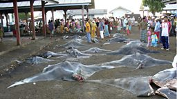 Photo: Dead mantas