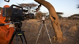 Filming a wild honeybee nest in Africa
