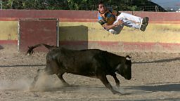 Bull Jumping champion