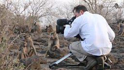 Getting close to baboons