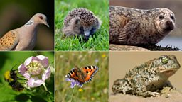 State of UK wildlife