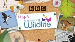 Summer of wildlife handbook