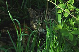 Cat in the grass.jpg