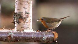 Bird feeder experiment