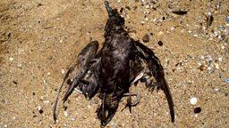Dead as a dodo 彻底过时了
