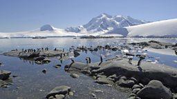 Penguins lost ability to taste fish 企鹅失去对鱼的味觉