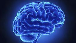 Breach the brain barrier  打破人类血脑屏障治疗疾病