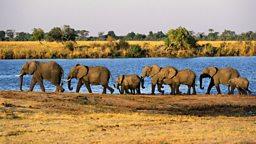 "Counting elephants,  Australian Elvis 空中数大象,澳大利亚""猫王节"""