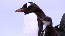 Penguin CCTV 企鹅监控器
