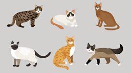 Cat Day 日本庆祝猫节