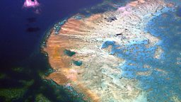 "Great Barrier Reef 'severely damaged' 大堡礁""严重受损"""