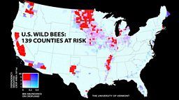 Demand for biofuel in US hits bee numbers
