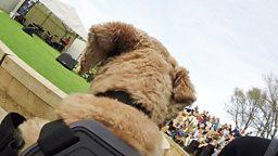 Canine concert 狗狗音乐会