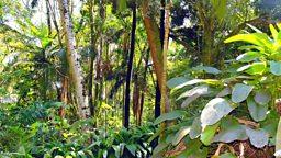 Loss of biodiversity affects human society 生物多样性减少给人类社会带来影响