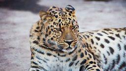 """World wildlife 'falls by 58% in 40 years' 全球野生动物总数""""四十年内下降58%"""""""
